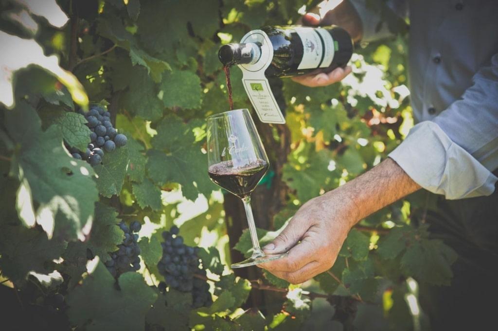LE CARLINE un vino eccellente biologico senza solfiti
