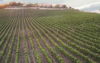Ruffino presenta ufficialmente il Chianti Classico Gran Selezione Romitorio di Santedame 2015